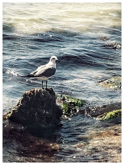 Sea Bird One Animal Water Animals In The Wild Wave Animal Themes Nature Beach Seagull Outdoors No People Perching Beauty In Nature Day Beach Collection Beach Photography Scenics The Week On EyeEm Rockport Texas Before Hurricane Harvey