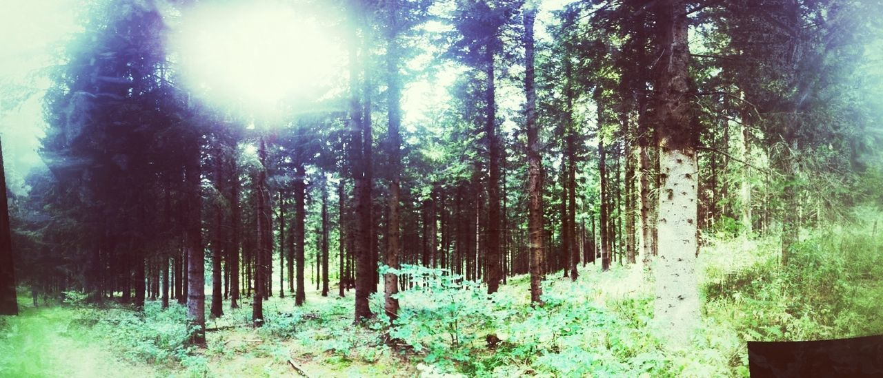 A Forest In The Forest The Cure Ifyougointothewoodstoday..