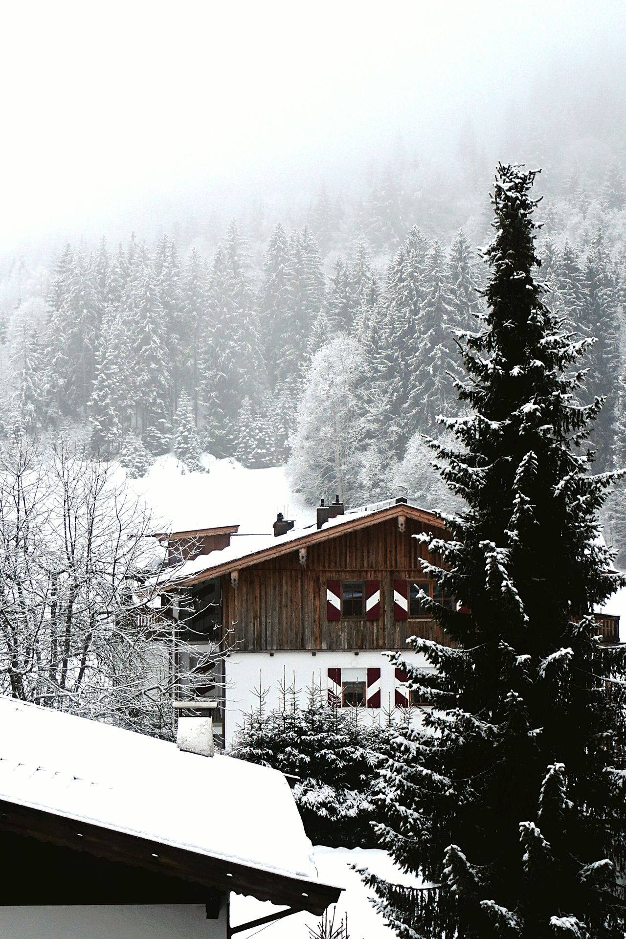 Winter Cold Temperature Snow Tree Nature Beauty In Nature Chalet Austria Kirchberg Mountain Mountains Skiing Cloudy Fog Foggy Morning