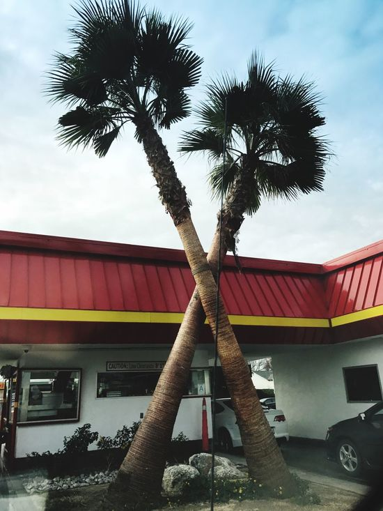 Palm Tree Tree Built Structure Architecture Building Exterior No People Low Angle View Outdoors Growth Day Sky Inandout California California Love Palm Tree Cars Travel Destinations Scenics Adventure Travel Nature Tree Burgers Food DriveThru