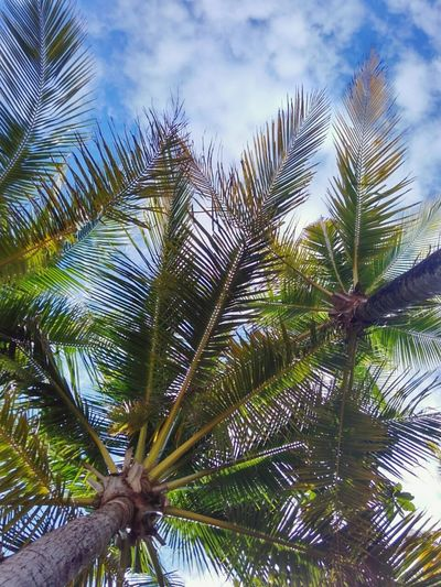 Hanging Out Palm Trees Palm Beach Beachphotography Sky Sky And Clouds Faded Xiaomi Xiaomiphotograph Check This Out