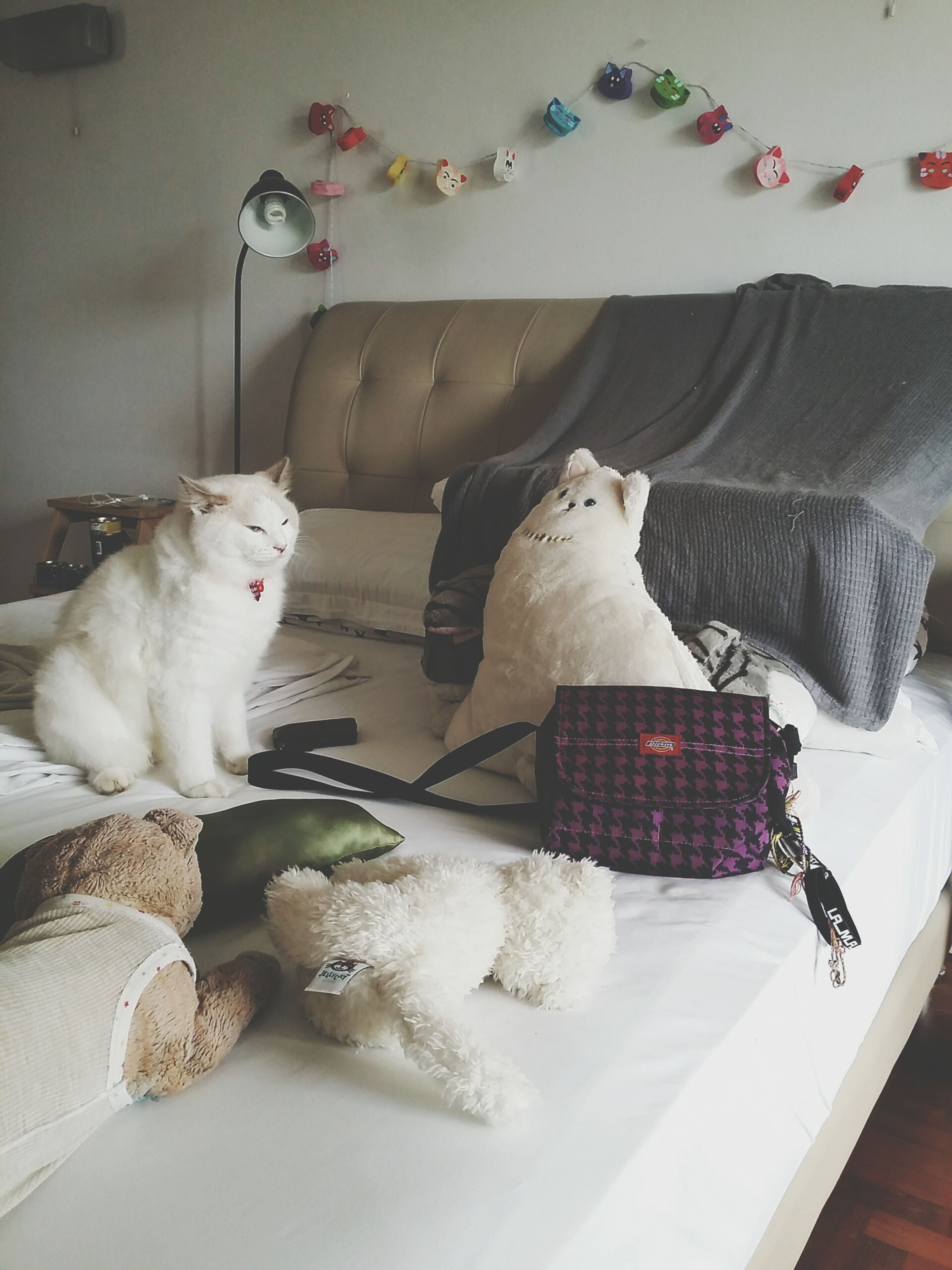 indoors, domestic animals, pets, food, animal themes, mammal, food and drink, relaxation, domestic cat, high angle view, cat, sitting, table, home interior, one animal, full length, resting, toy