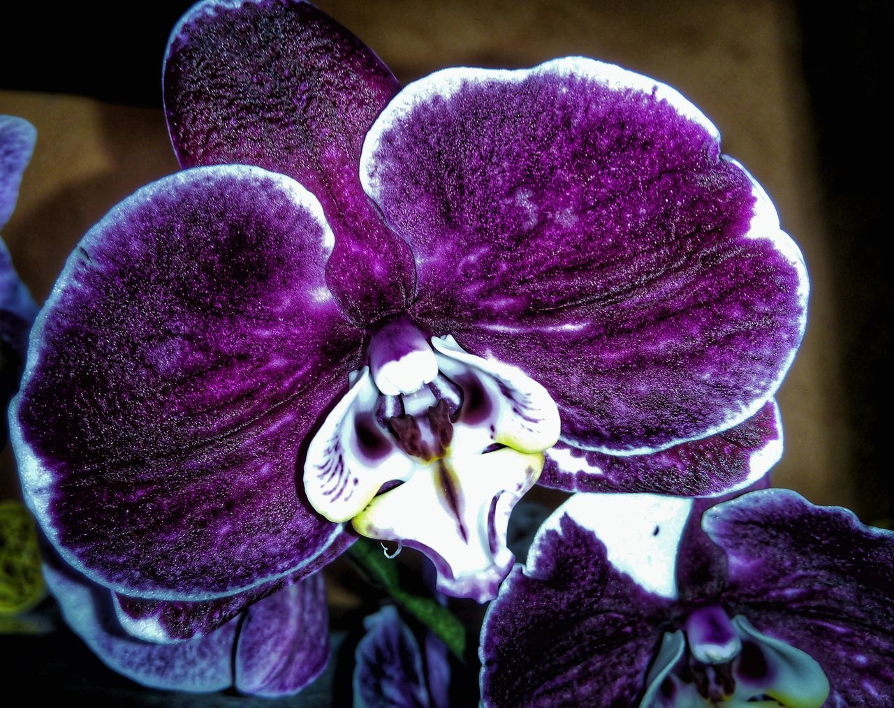 Hello World Taking Photos Flowers_collection Purple Beauty In Nature Flower Photography No People Flower Head Flower Orchid Blossoms Flower Collection Life In Colors