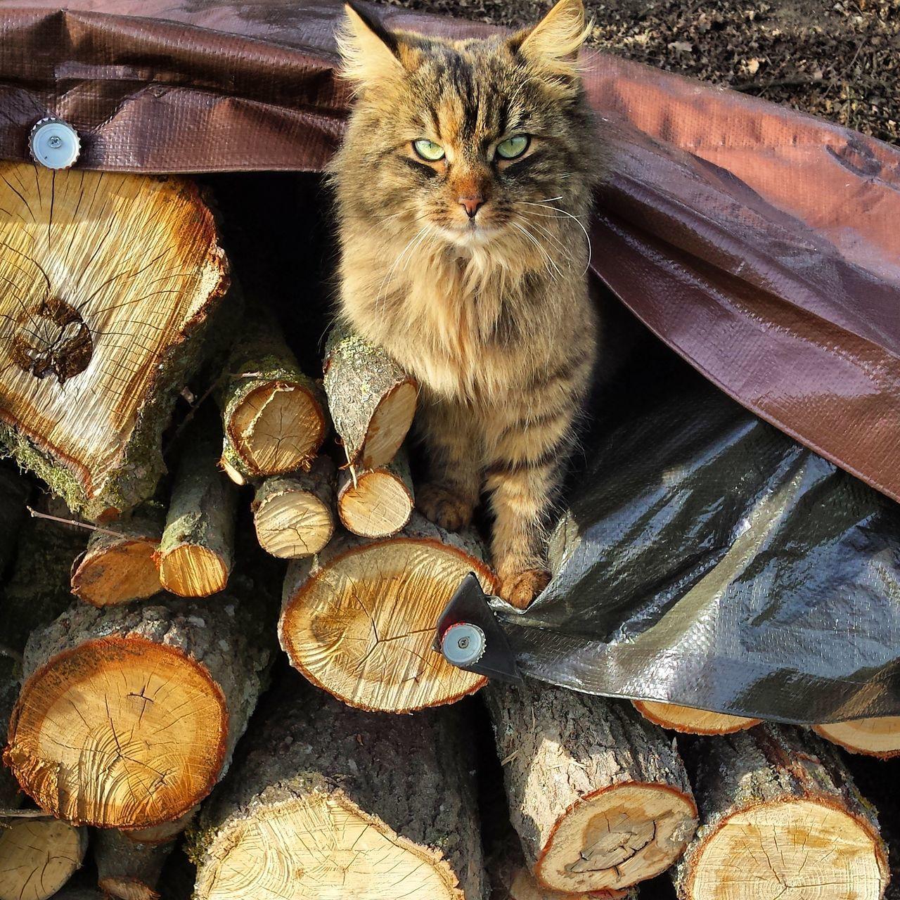 One Animal Animal Themes Domestic Cat Pets Day Cat Cats Catsoftheworld Grumpycat Grumpy Face Grumpy Cat Catlovers Catlady Animal Animallovers Catsagram Catoftheday Wood Nature