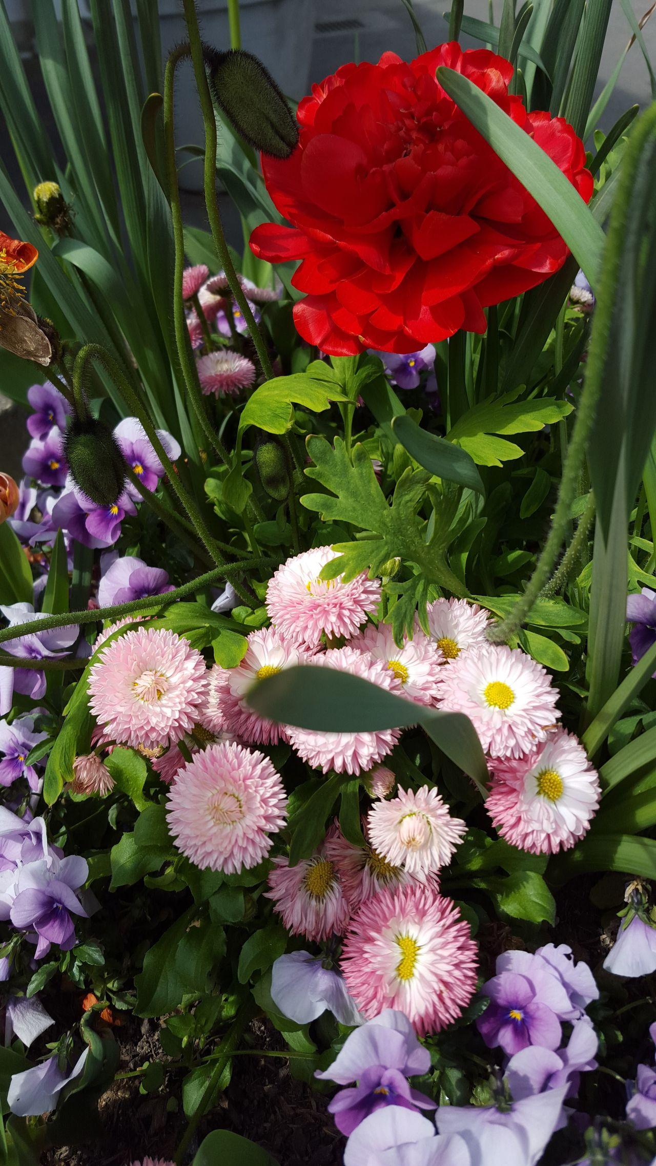 Flower Beauty In Nature Geneve Suisse  Printemps Geneve, Switzerland
