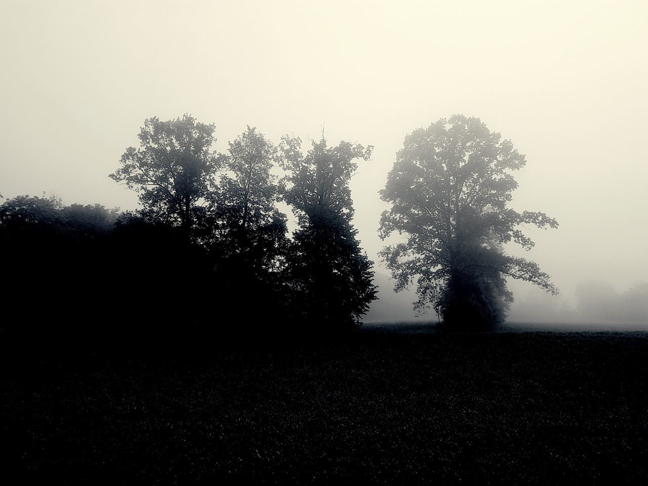 Silhouette Tree No People Nature Outdoors Beauty In Nature Freshness Dissolving Foggy Morning Foggy Landscape EyeEm Best Shots - Nature Capture The Moment EyeEm Masterclass Neighborhood Map Outdoor Photography Black & White My Unique Style Getting Inspired EyEmNewHere Blackandwhite Eye4photography  EyeEm Best Shots Something Different The Great Outdoors - 2017 EyeEm Awards EyeEm Gallery