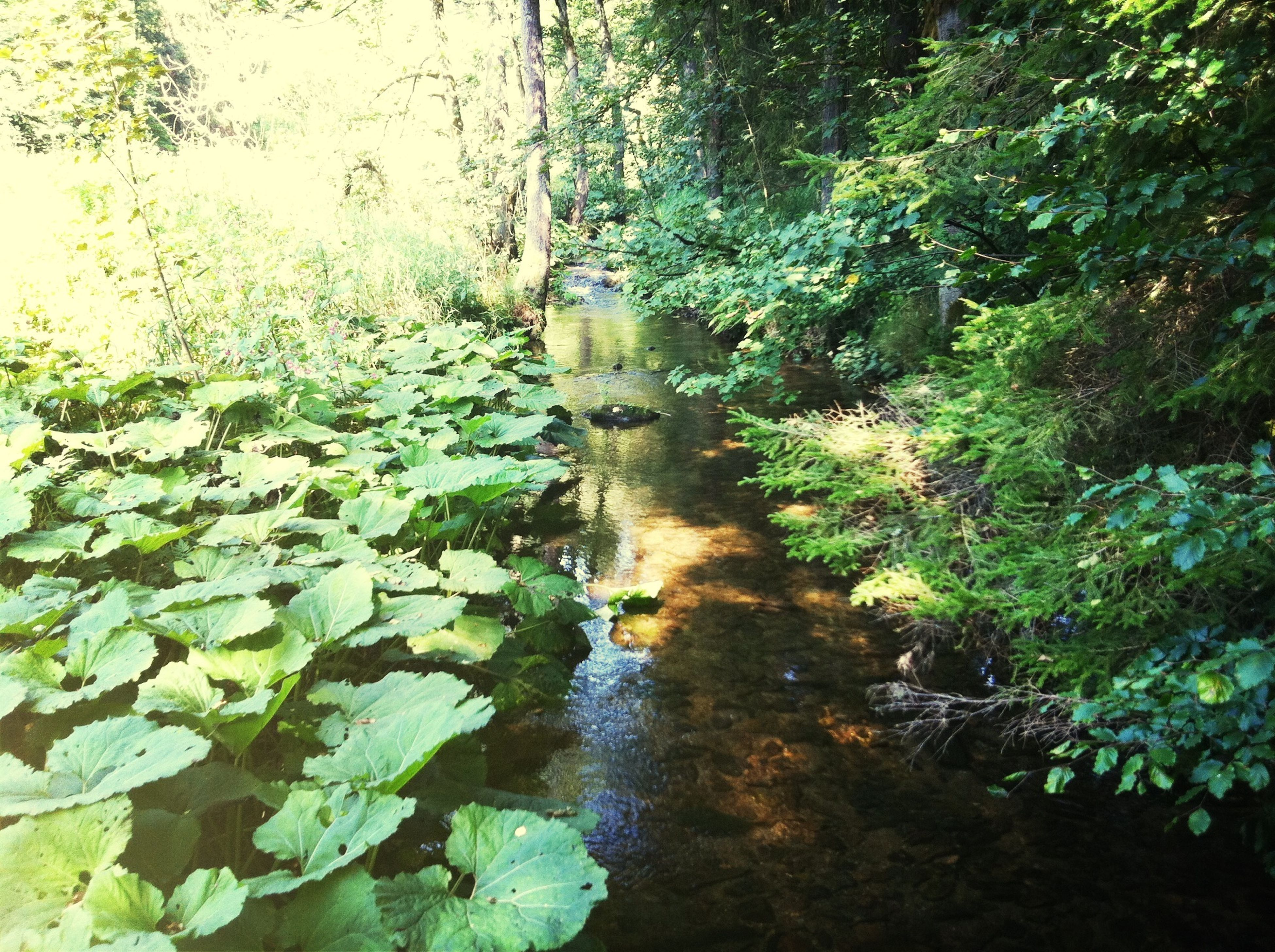 German wood ... Frankenwald  LoveGermany Hikinggermany  Hiking