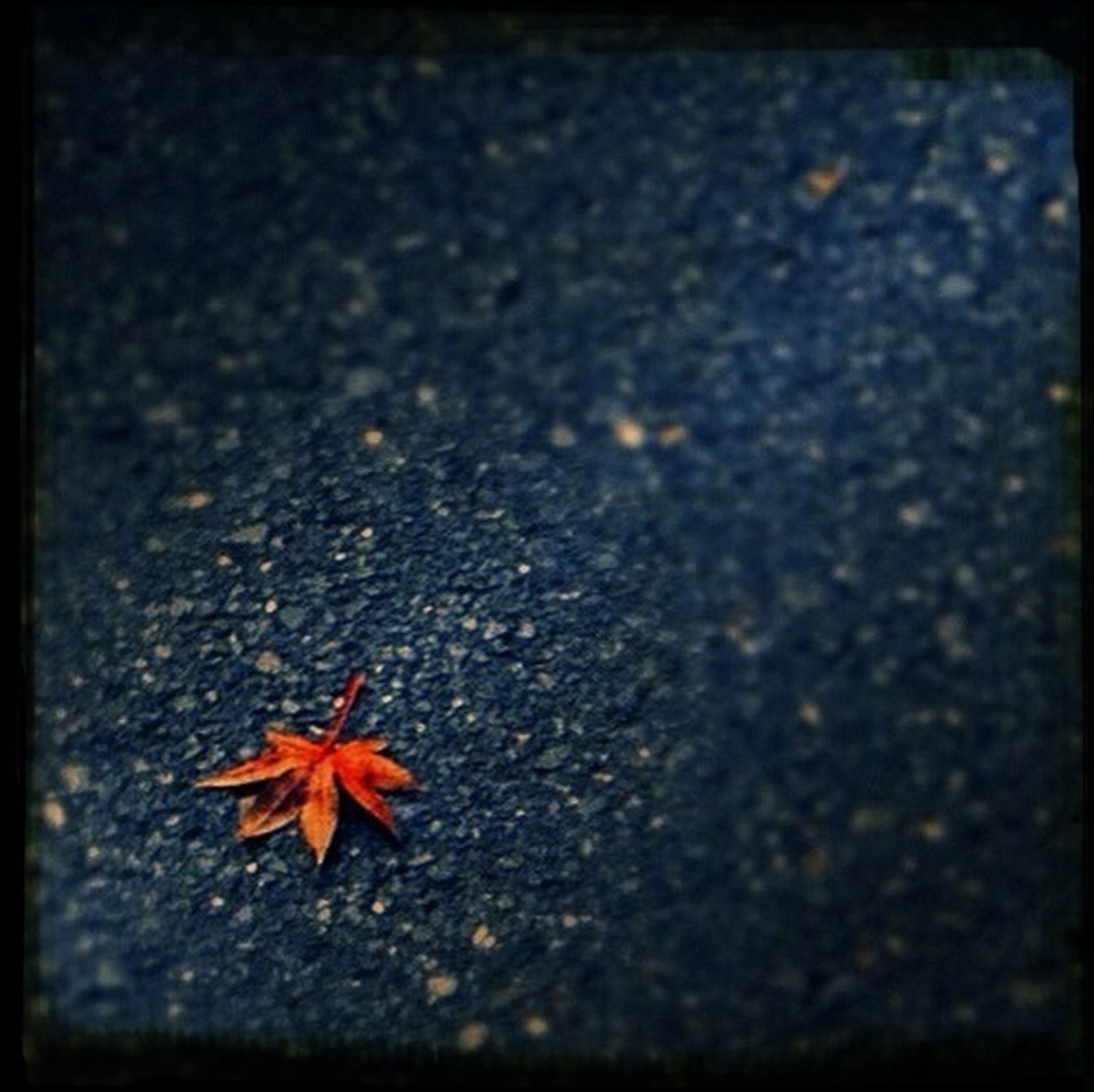 leaf, high angle view, dry, close-up, autumn, fallen, asphalt, nature, fragility, change, ground, selective focus, textured, street, no people, outdoors, season, orange color, day, road