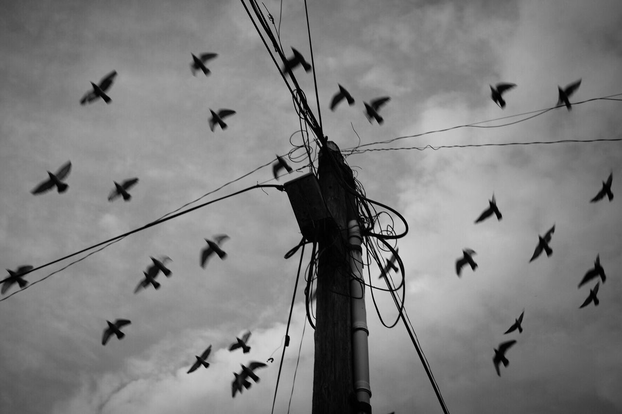 Ominous Sky Power Line  Cloud - Sky Bird Electricity  Flock Of Birds Shootermag Street Photography Monochrome Bw_collection Black And White