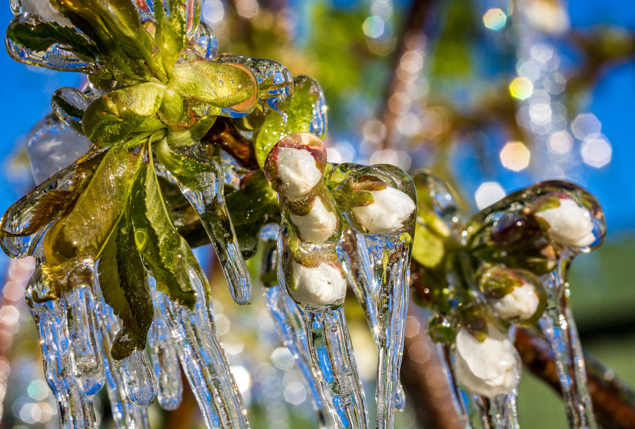CLOSE-UP OF FROZEN PLANT AGAINST BLURRED BACKGROUND
