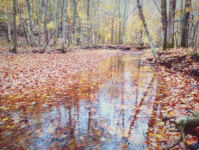 Autumn Colors Fall Leaves Creek Water Reflections Fallen Leaves Taking Photos Nature EyeEm Best Shots Trees Beautiful Colors Hello World Mobilephotography Westvirginia Exploringpaidoff