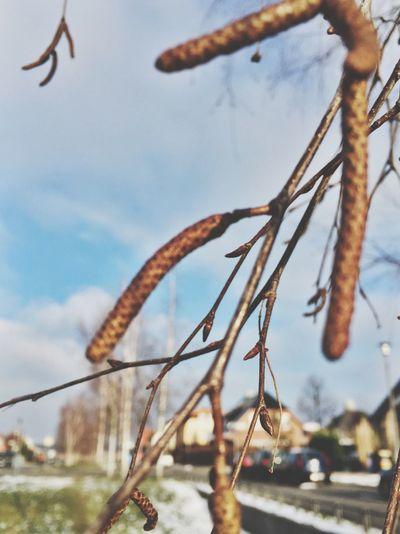 Enjoying The Sun Planting Depth Of Field Beautiful Nature EyeEm Best Shots Closeup RePicture Growth