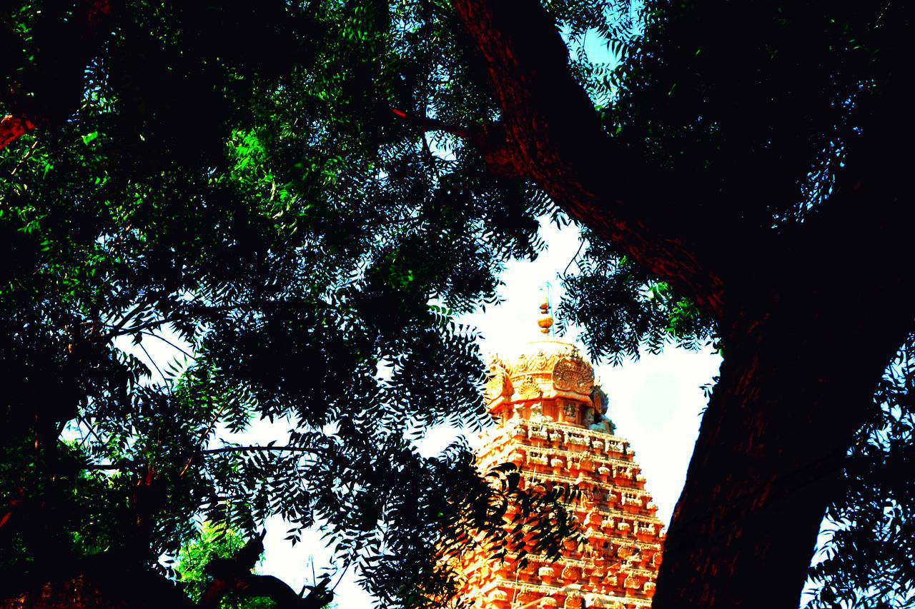temple focused inbetween tree branches Architecture Big Temple Built Structure EyeEm Festival 16 EyeEm Team Hidden Gems  Low Angle View No People Pride And Honor Scenics Tall - High Temple Thanjavurtourism Tourism Tree Week On Eyeem