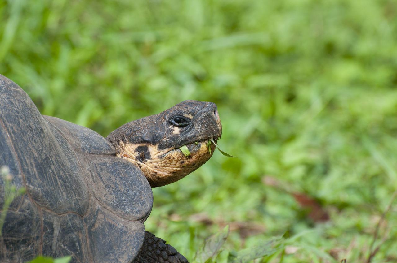Beautiful stock photos of frosch, Animal Head, Animal Shell, Animal Themes, Animal Wildlife