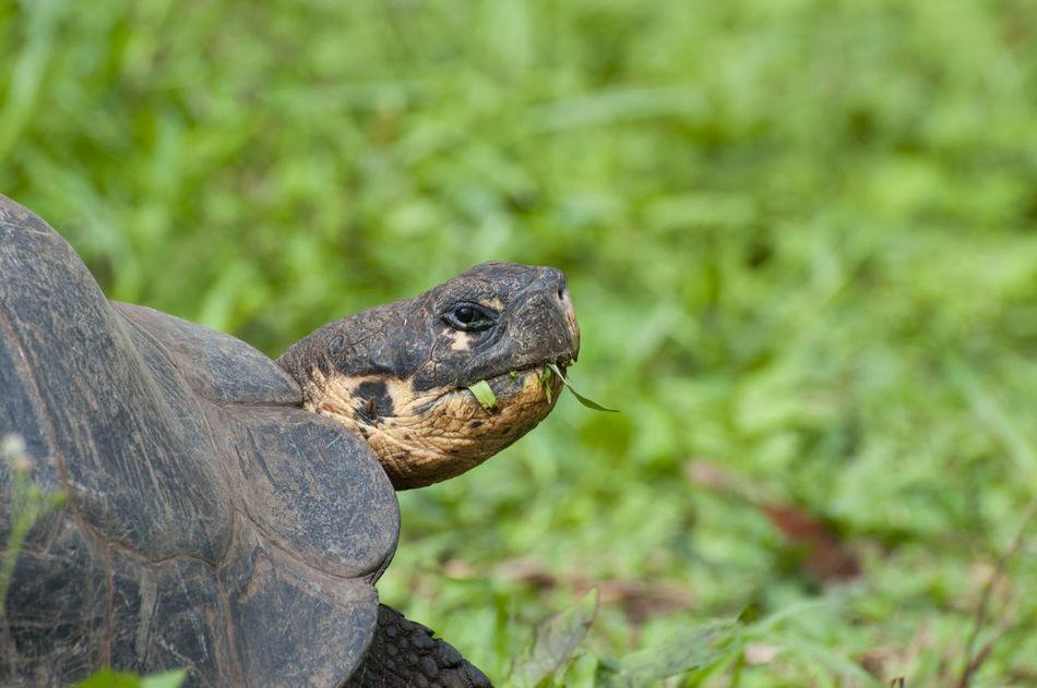 Beautiful stock photos of schildkröte, Animal Head, Animal Shell, Animal Themes, Animal Wildlife