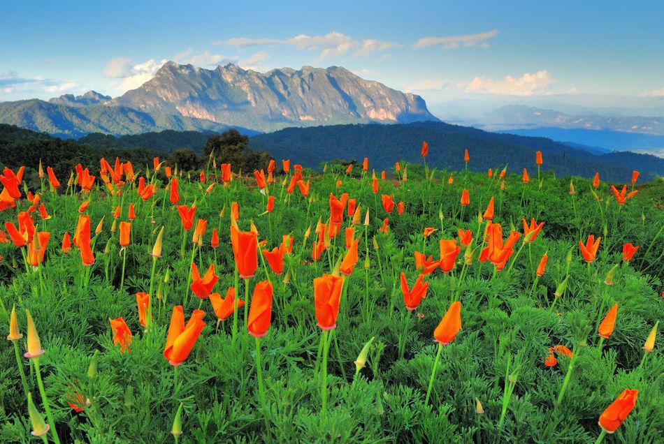 Beautiful stock photos of orange, Cloud, Day, Flower, Flower Head