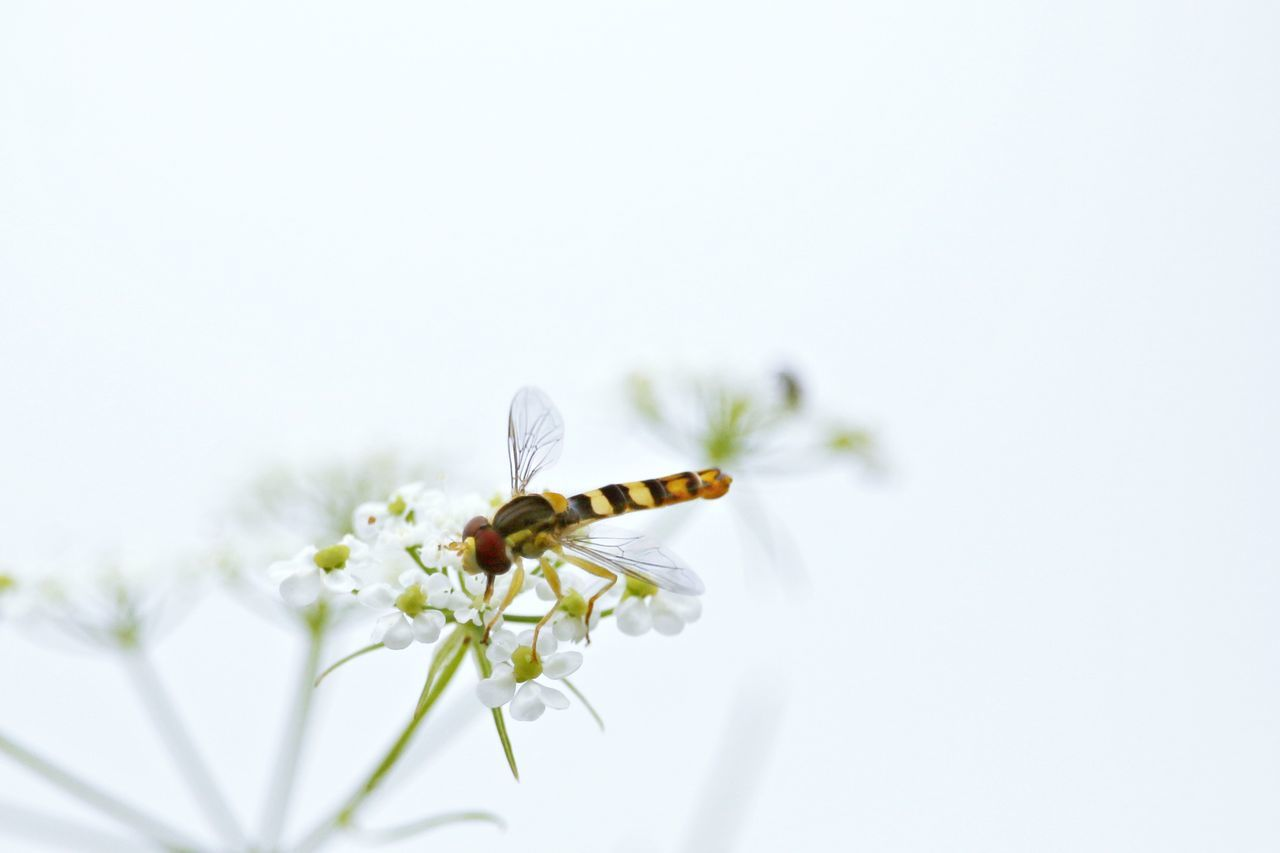 Beautiful stock photos of insects, Animal Themes, Animal Wildlife, Animals In The Wild, Beauty In Nature