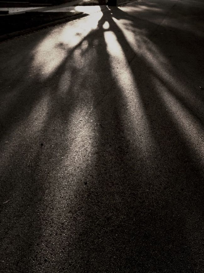 Shadow Tree Autumn The Illuminator - 2014 EyeEm Awards