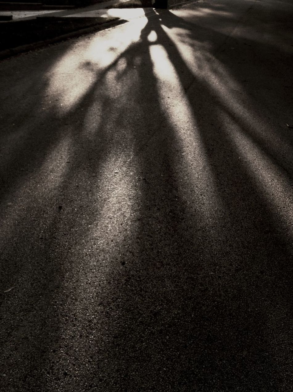 Shadow Tree Autumn The Illuminator - 2014 EyeEm Awards