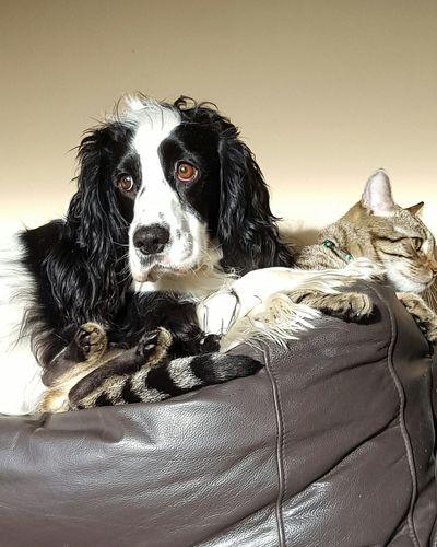 Pets Of Eyeem Pets Petsandanimals Cats Of EyeEm Dogs Of EyeEm Freindsforever Bestpals Bestfriend Love ♥ Family❤