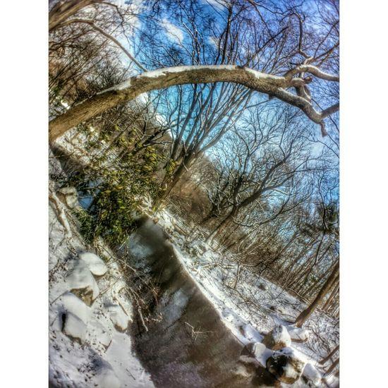 Brooklyn Winter Snow Park Macro GalaxyS4Photography