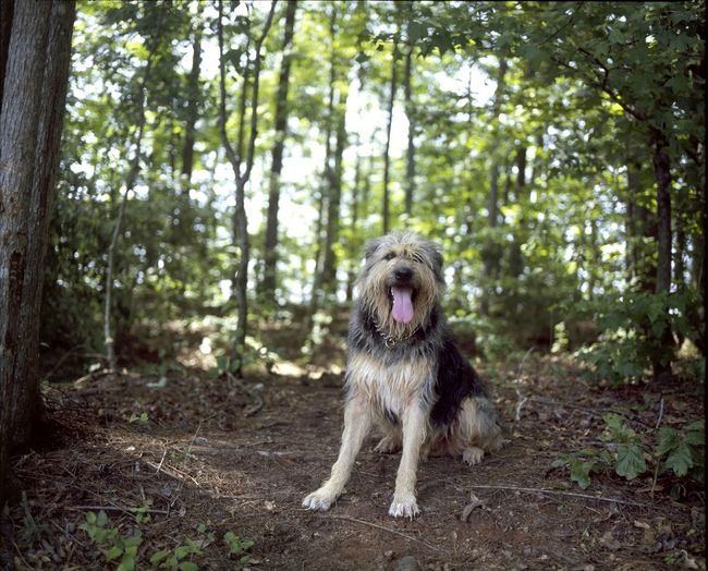Mamiya RB67 Medium Format Velvia100 120mm Filmisnotdead Dog Nature