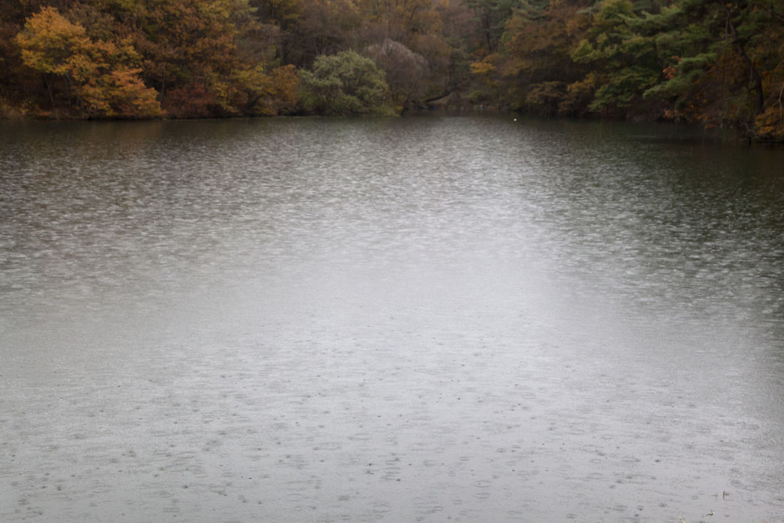 autumn raining pond at Namwon in Jeonbuk, South Korea Autumn Pond Raining Autumn Autumn Pond Beauty In Nature Day Fall Forest Lake Landscape Nature No People Outdoors Raining Pond Scenics Tranquil Scene Tranquility Tree Water