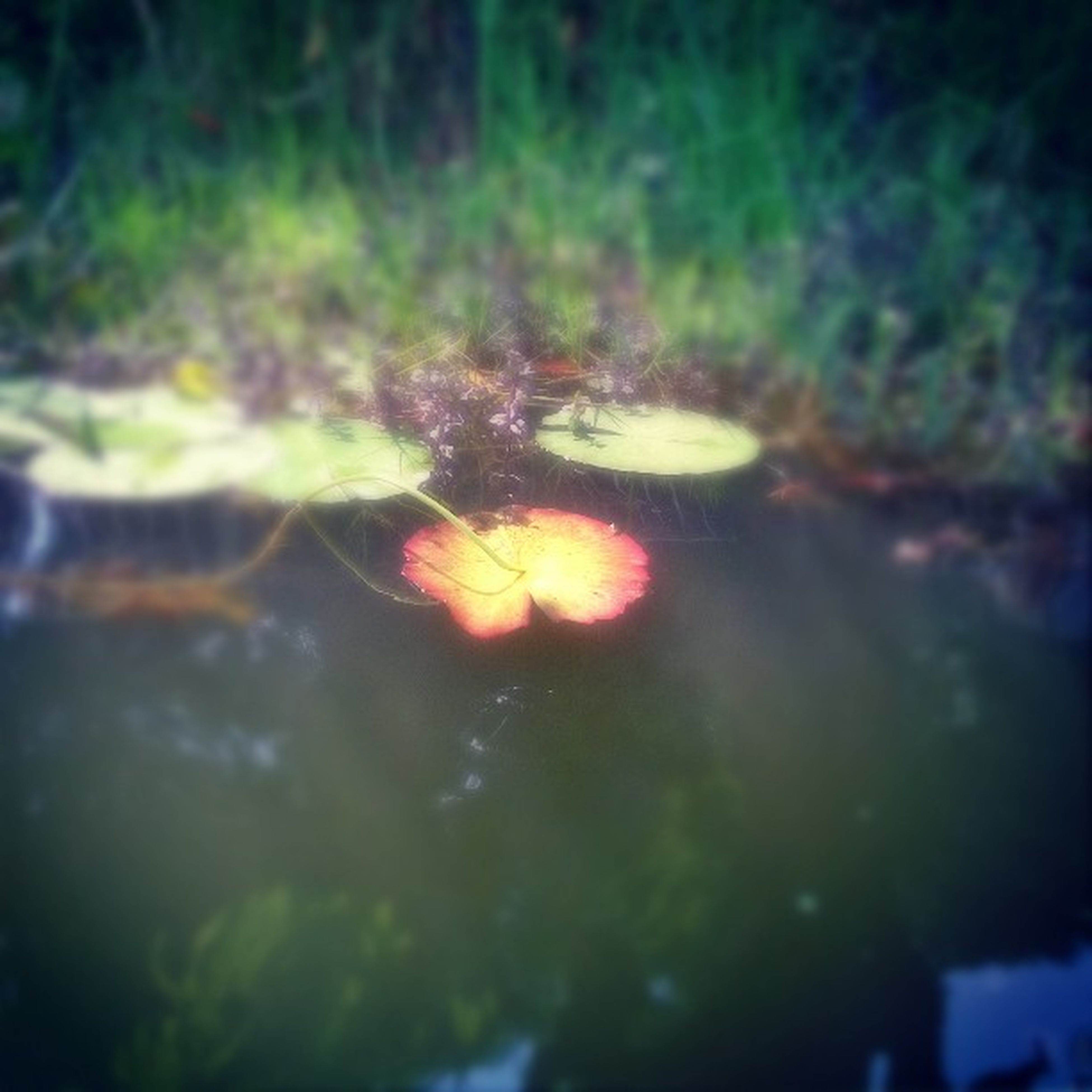 selective focus, water, nature, growth, close-up, night, outdoors, focus on foreground, illuminated, no people, tree, plant, beauty in nature, tranquility, green color, reflection, rock - object, glowing, multi colored
