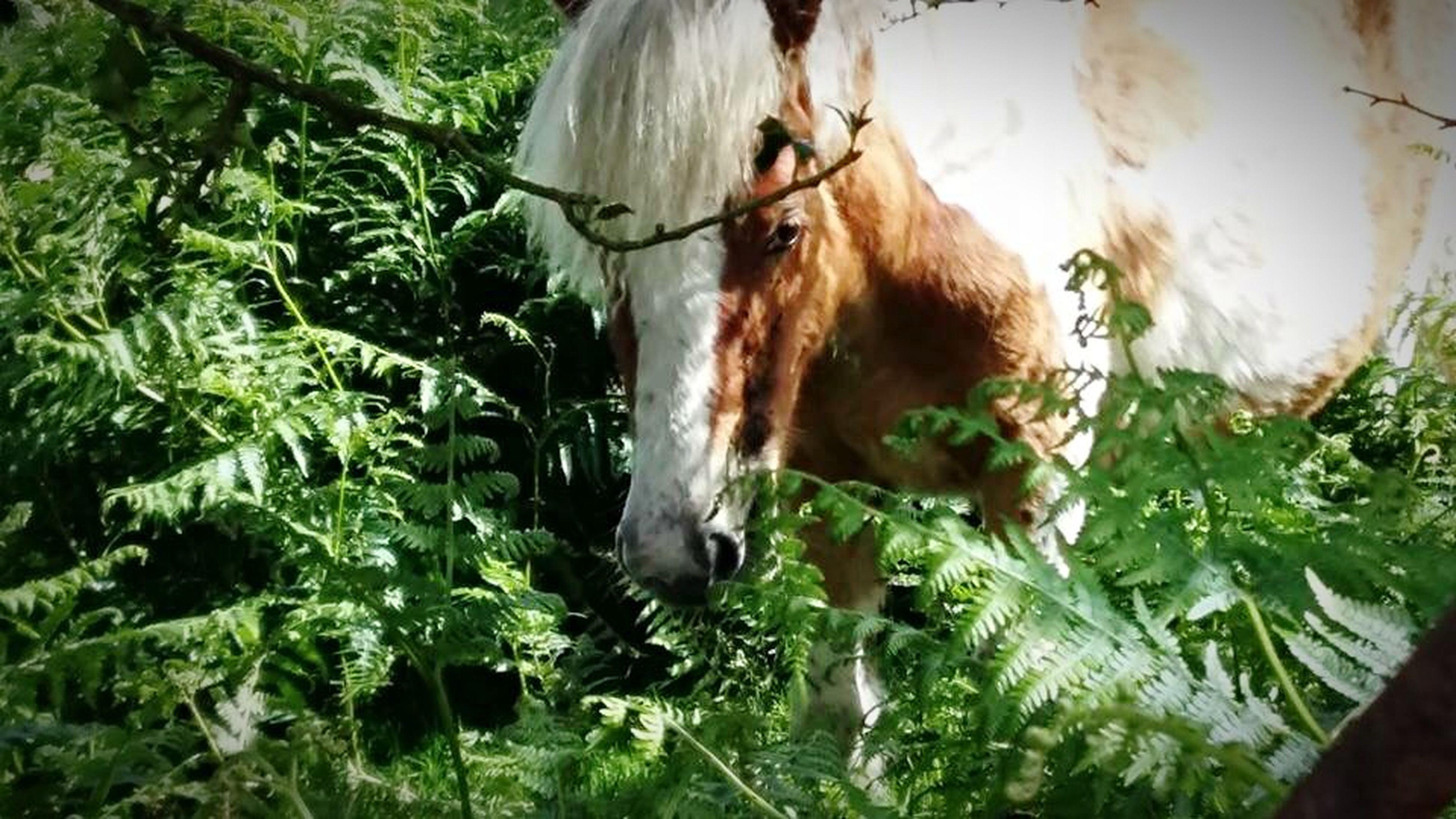 Moorland pony Nature Animals Cornwall Bodmin Moor Moorland Horse Ponies Grass Moorlandpony
