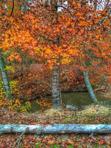 Trees are changing colors here in Texas Leaves Trees Tree_collection  ColorChanging Hdr_Collection Texas