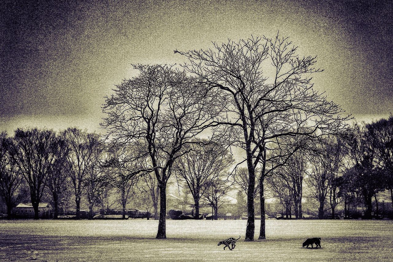 Live For The Story Bare Tree Tree Outdoors Branch Animal Themes Sky Winter Nature Cold Temperature Day No People Beauty In Nature Mammal The Great Outdoors - 2017 EyeEm Awards