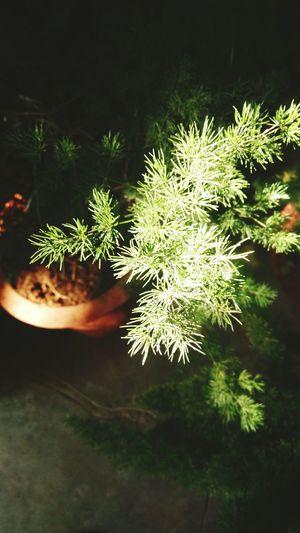 Green EyeEm Best Shots EyeEm Best Edits Eyeemnaturelover Hello World Hugging A Tree Random Nature Flowers,Plants & Garden