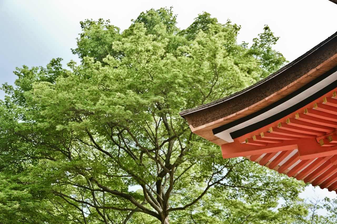 tree, low angle view, green color, no people, day, growth, outdoors, architecture, nature, sky