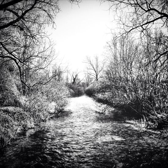 Blackandwhite Nature Landscape River