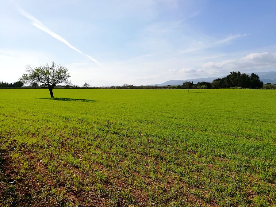 Nature Agriculture Growth Field Tranquility Landscape Rural Scene Beauty In Nature Scenics Green Color Sky Tranquil Scene Tree No People Outdoors Day