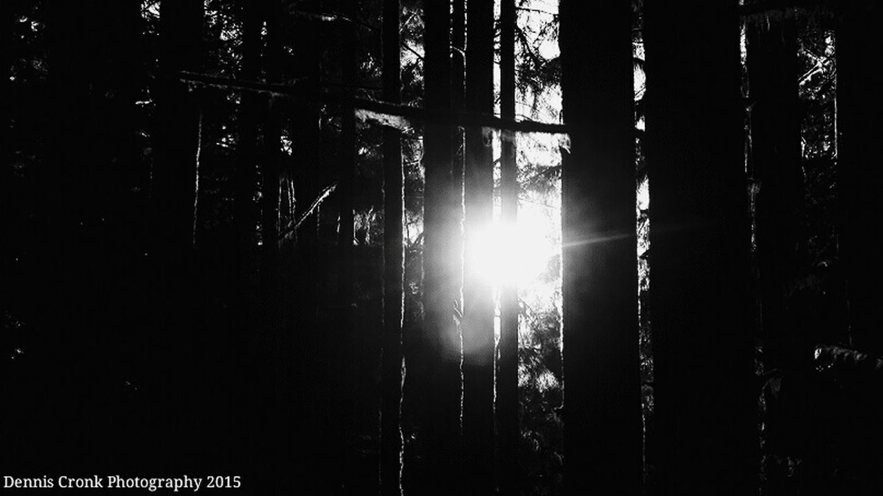 forest, tree, sun, nature, silhouette, sunlight, no people, low angle view, day, outdoors, growth, scenics, beauty in nature, sky