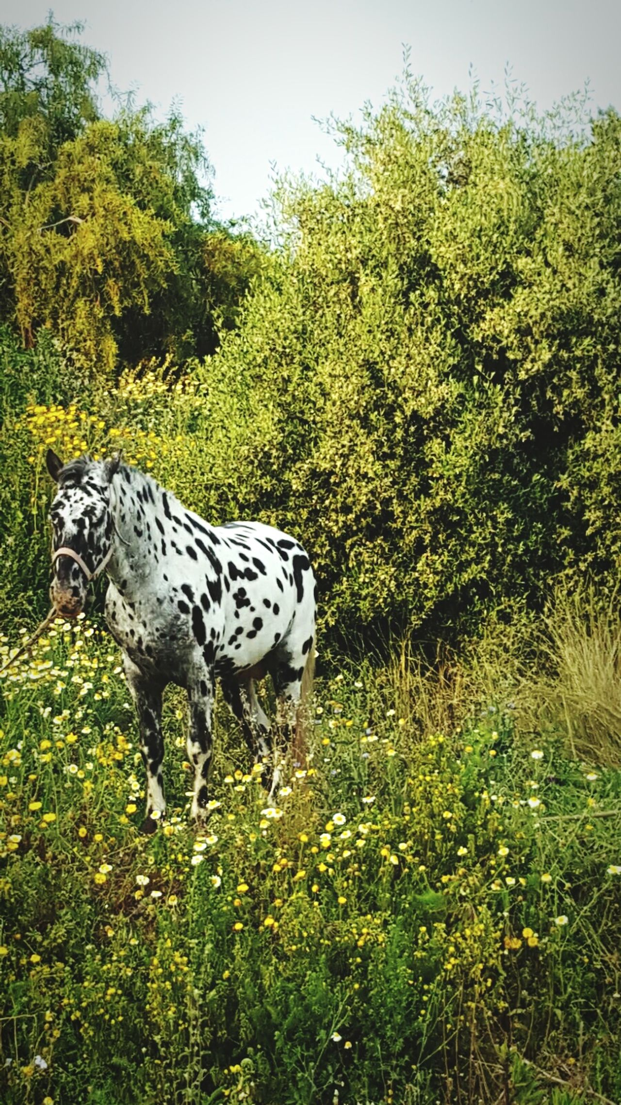 Animal Themes One Animal Day Nature Outdoors Animal Markings Horse Photography  Gardens Nerja Andalucia Nerja Coast Nerja Coastal View Spotted Grass Mammal No People Full Length Tree Leopard