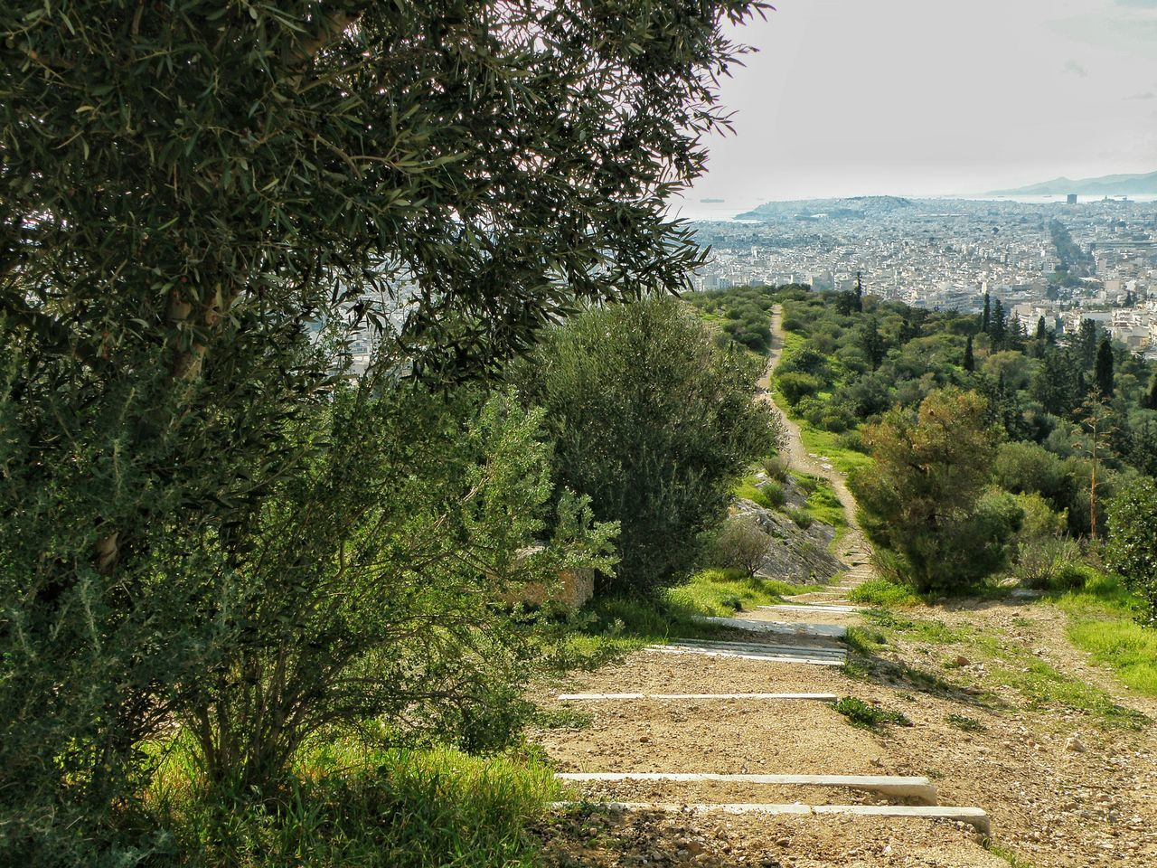 Urban Nature City From Above Pathway Path To Nowhere Perspective Filopapou Hill Athens Athens, Greece Streetphotography Street Photography Green Green Green Green!  Urban Spring Fever