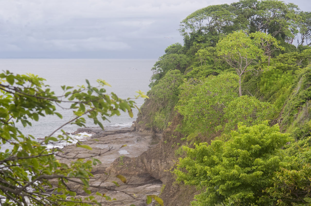 Peninsula with cliffs and tropical trees - Punta Leona, Costa Rica Bay Beach Beauty In Nature Coastline Costa Rica Growth High Angle View Landscape Landscape_Collection Landscape_photography Nature No People Pacific Ocean Peninsula Punta Leona Puntarenas Rocky Beach Rocky Coastline Scenics Sea Tranquility Tree Tropical Tropical Climate Water