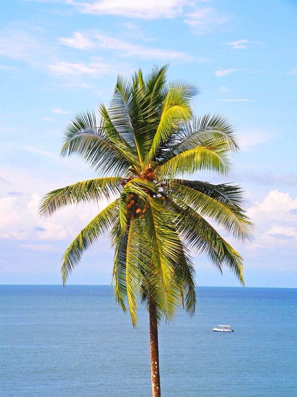 Beautiful stock photos of jamaica, Blue, Cloud - Sky, Coconut Palm Tree, Day