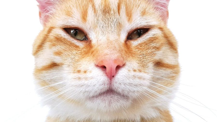 Katzenliebe Katze Katzenfoto Katten Rode Kater Catsoftheday Catoftheday Cats Of EyeEm Huisdieren Huisdier Maastricht Catsofeyem Cat Brothers Catsoftheworld Catslife Cats Animal Themes Catportrait Catsagram The Cat Catsoftheword Cats Of EyeEm. Catsofintagram Cats Lovers  Animal Love