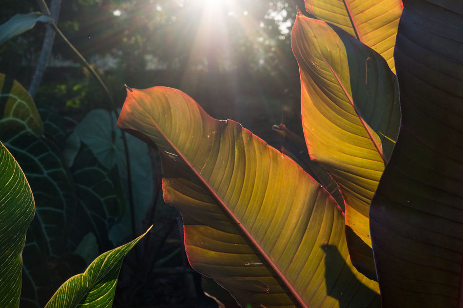 In the Park, Kochi, Kerala Beauty In Nature Cochin Color Colorful India Kerala Kochi Leaf Light Light And Shadow Nature No People Outdoors Plant Real Life Real People Real People Photography Real People, Real Lives Street Photography Streetphotography Travel Travel Destinations Travel Photography