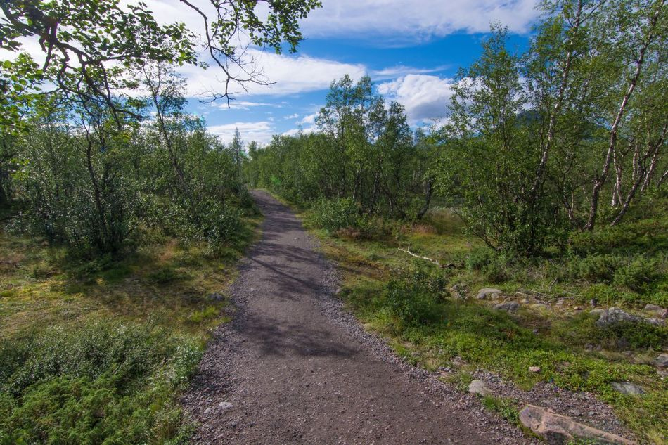 Tree Forest Tranquil Scene The Way Forward Tranquility Non-urban Scene Scenics Landscape Nature WoodLand Beauty In Nature Outdoors Footpath Hiking Lappland Sweden Fjallravenclassic