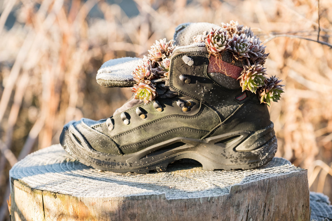 Close-up Dachwurz Day Focus On Foreground Frost Crystals Nature No People Old Shoes Outdoors Roofwurz Wintertime