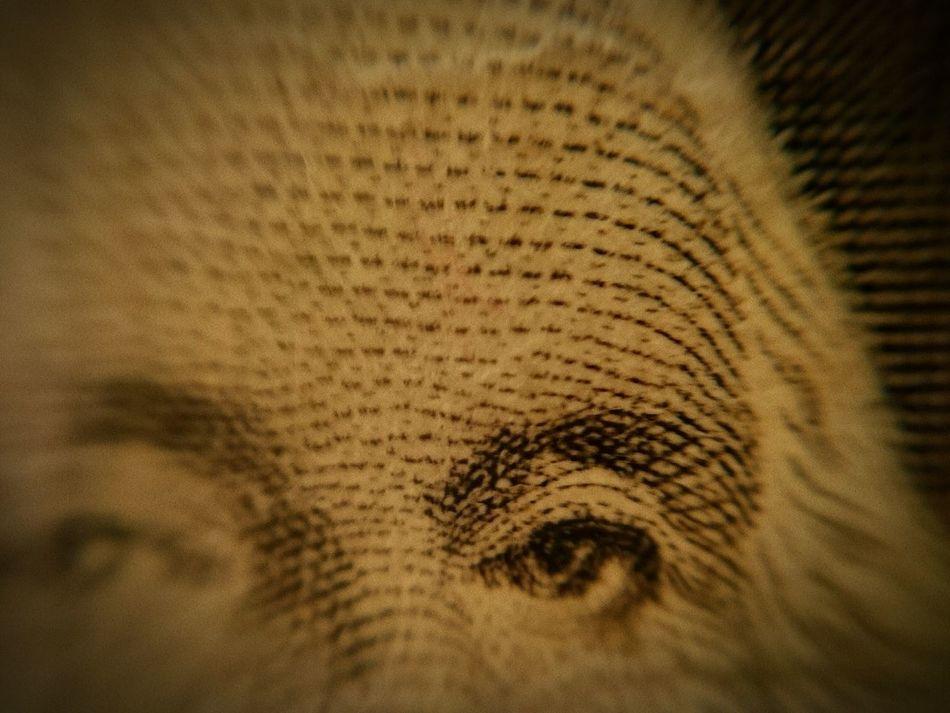 Beautiful stock photos of money, American Culture, American One Dollar Bill, Benito Juárez, Business