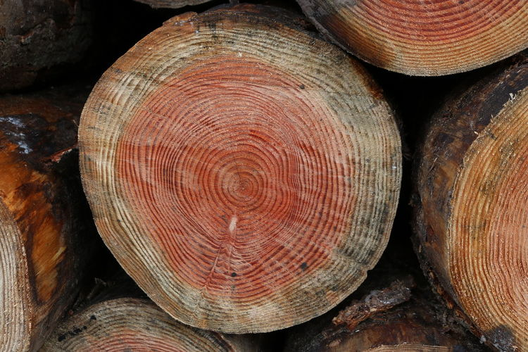 Brown Cut Tree Trunk End Of Logs Red Stack Tree Age Tree Trunk Year Rings
