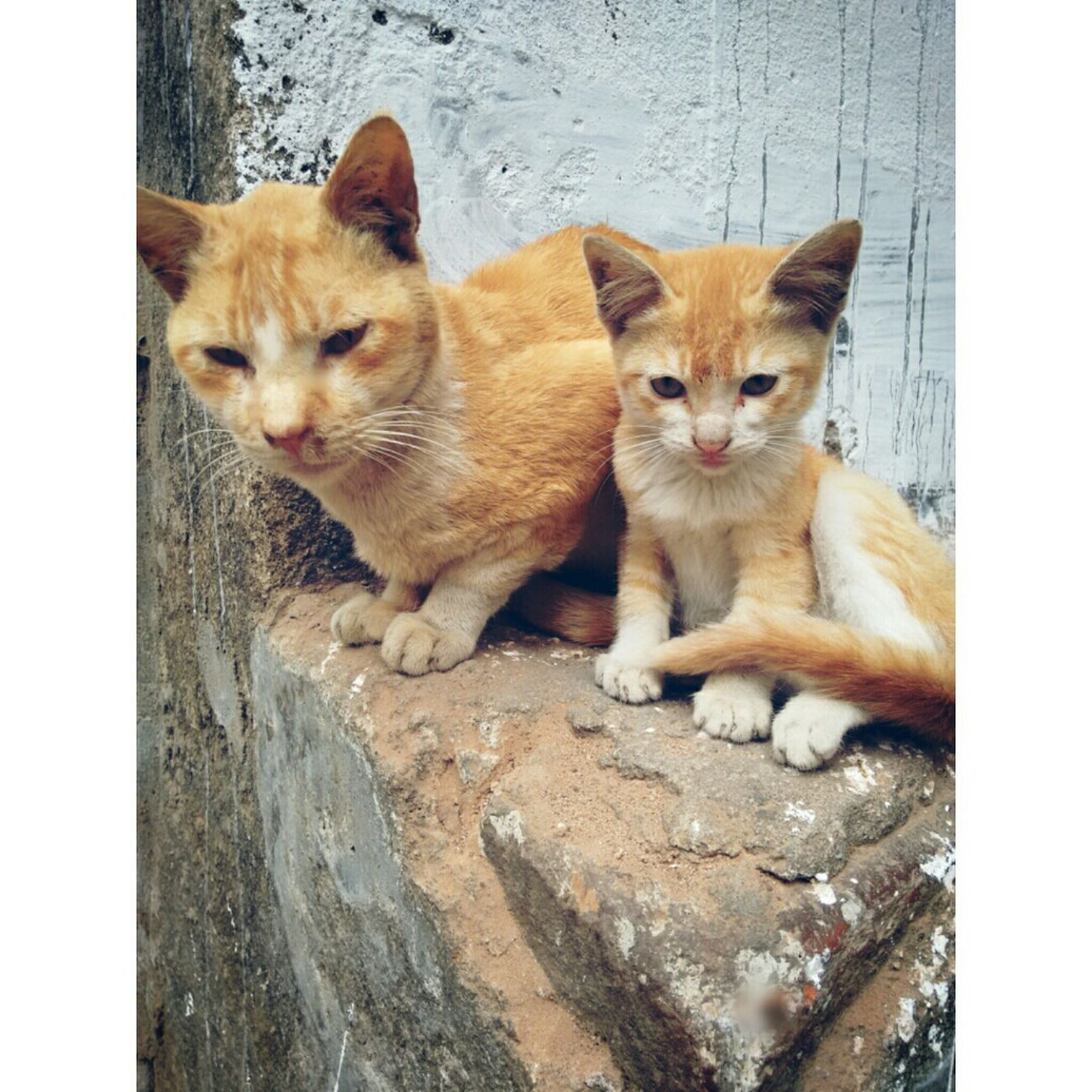 Cute Pets Cat Motherslove Instasize
