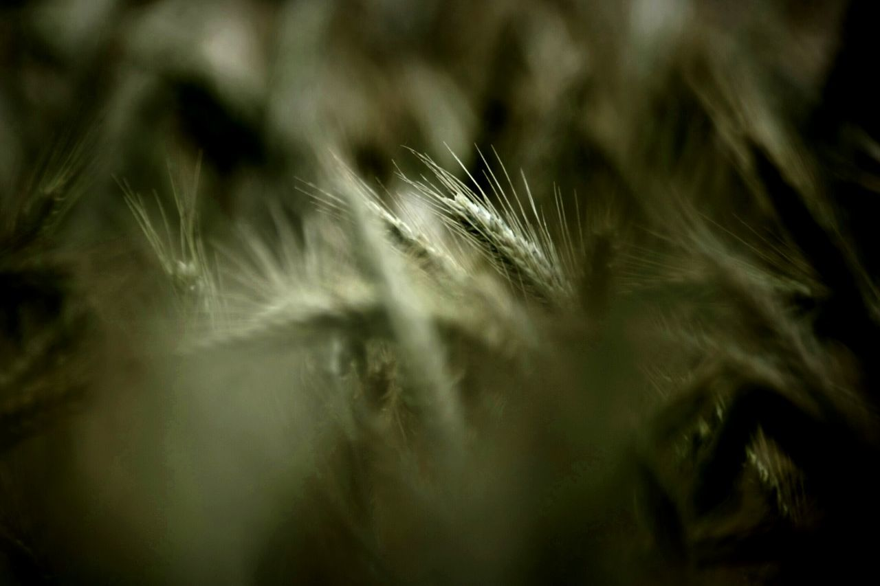 selective focus, close-up, softness, nature, no people, full frame, feather, backgrounds, fragility, beauty in nature, day, growth, outdoors