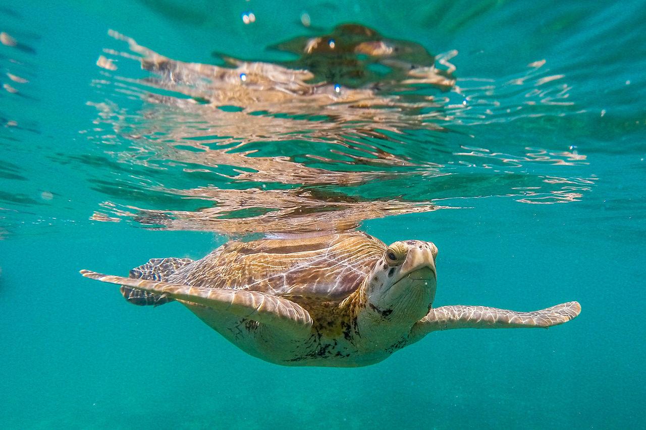 Beautiful stock photos of schildkröte, Animal Markings, Animal Shell, Animal Themes, Animal Wildlife