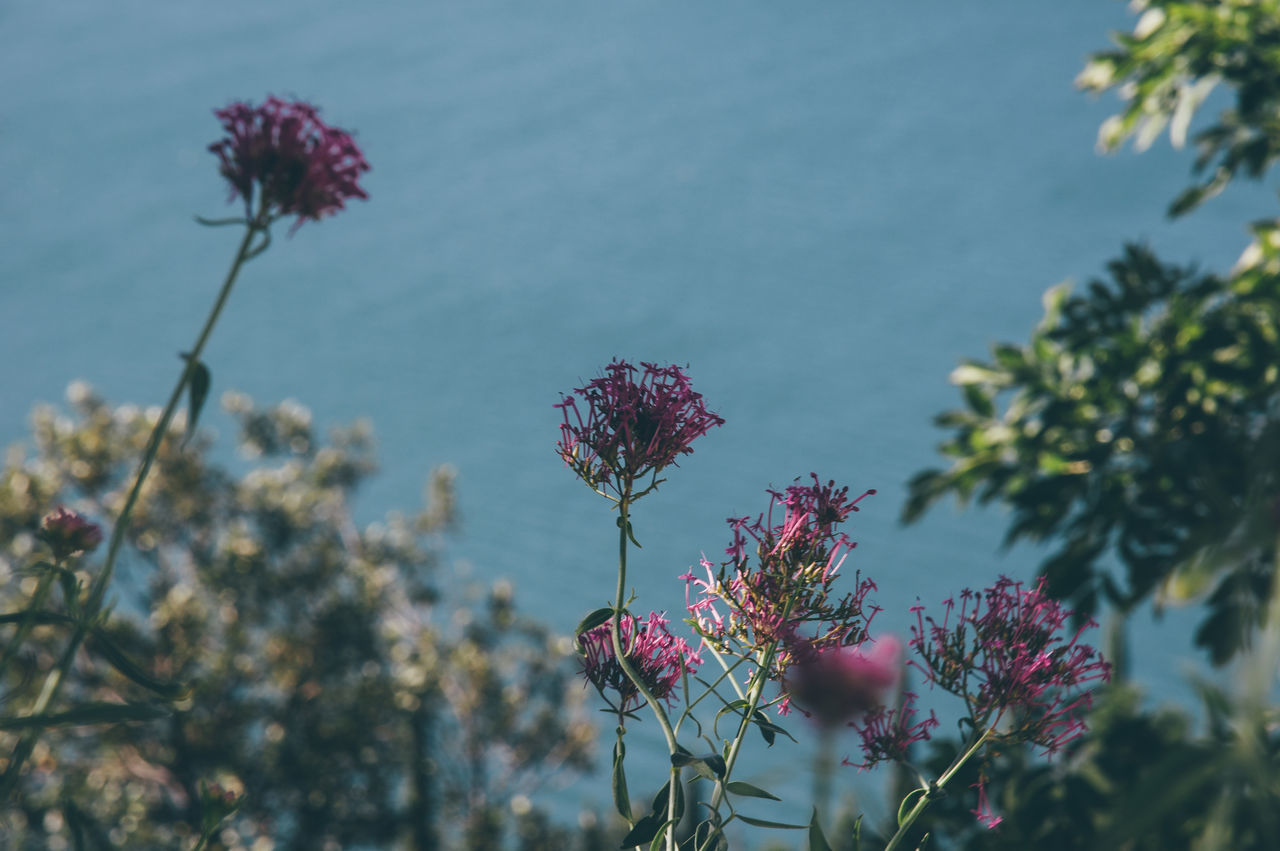 Abstract Beauty In Nature Blooming Blossom Blossoms  Close-up Day Flower Flower Head Fragility Freshness Growth Low Angle View Mediterranean  Mediterranean Sea Nature No People Outdoors Pink Color Plant Sky Travel